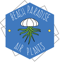 BEACH PARADISE AIR PLANTS